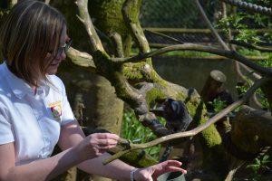 Feeding the monkey 2