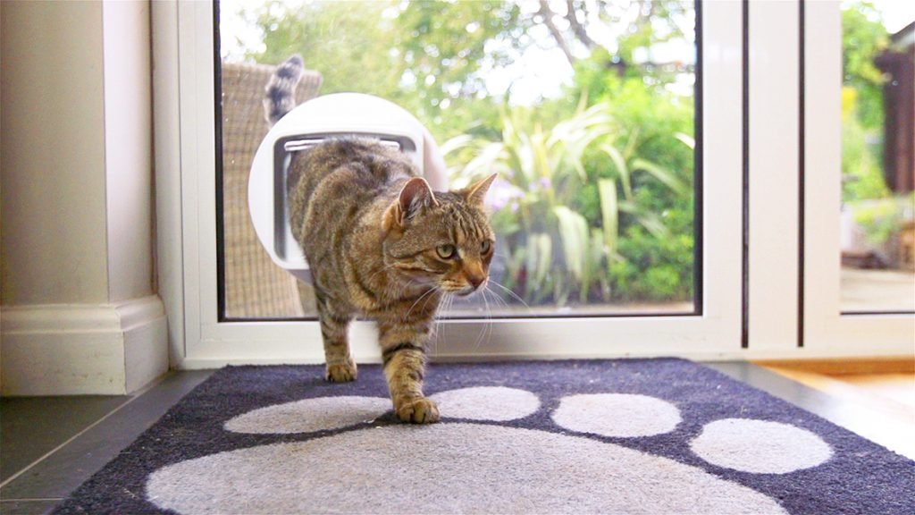 Cat Flaps in Glass